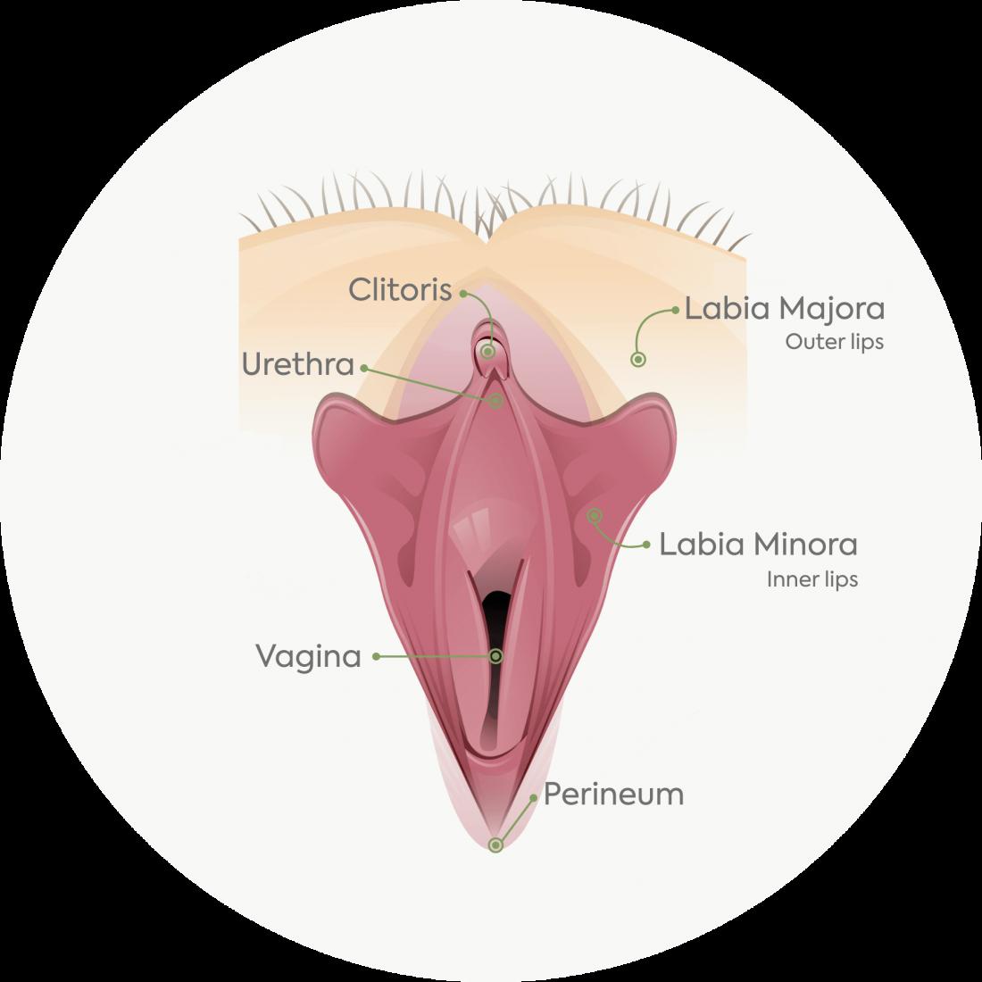 Dettagli Procedurali: Labioplastica